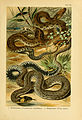 Deutschlands Amphibien und Reptilien (5981667119).jpg