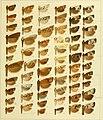 Die palaearktischen tortriciden. Eine monographische darstellung mit 24 tafeln in farbendruck, einer stammtafel und mehreren abbildungen im text. Mit einer unterstützung des (20938752945).jpg