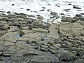Dipping Strata - geograph.org.uk - 1392547.jpg