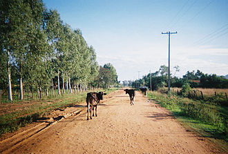Dirt road - Cattle on a dirt road in Paraguay.