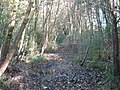 Discretionary path by Derwent - geograph.org.uk - 298055.jpg