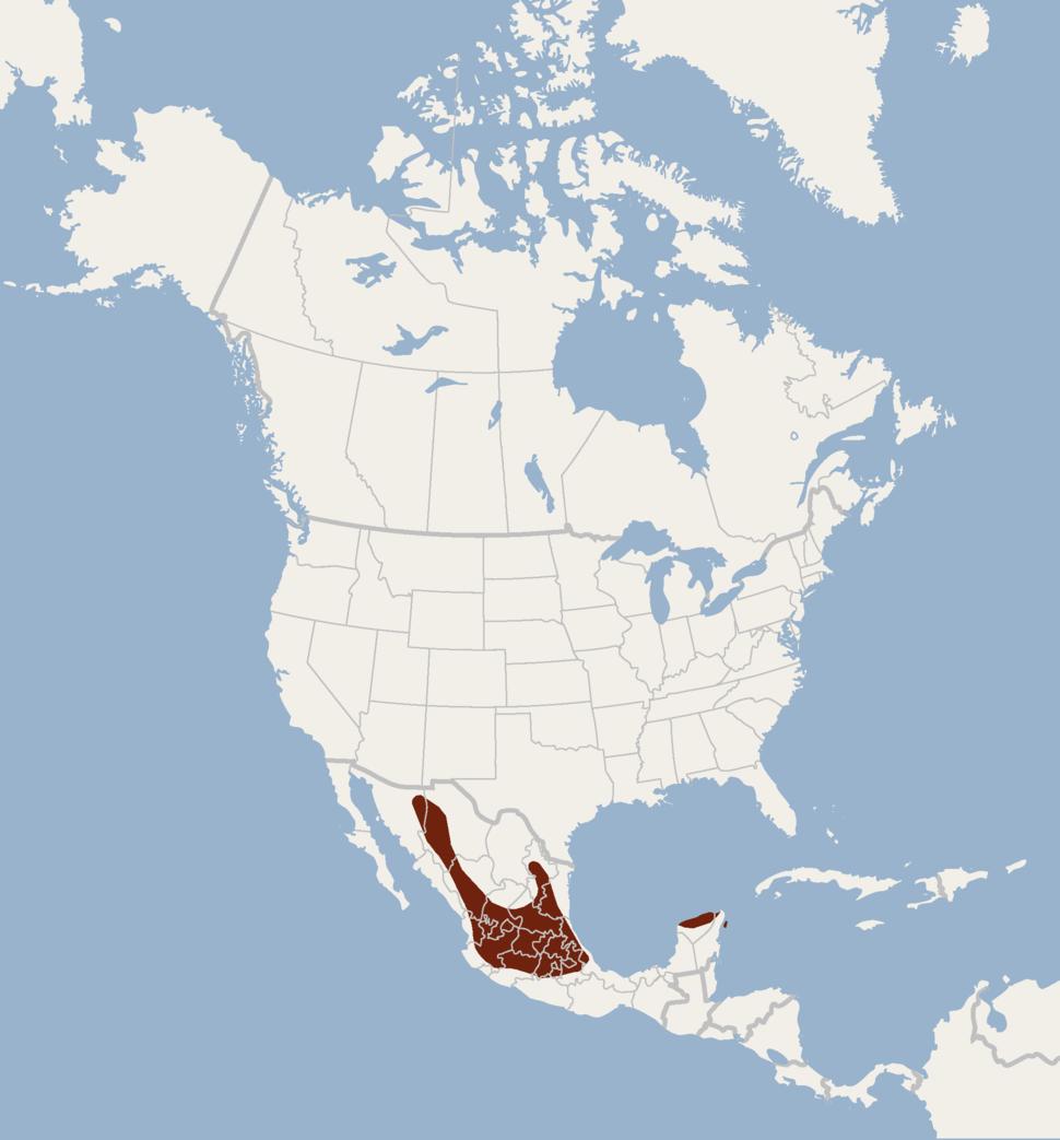Distribution of Corynorhinus mexicanus