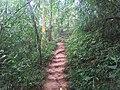 Doi Suthep Monk Trail 3.jpg