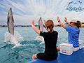 Dolphin Assistant Trainer Course.jpg