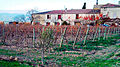 Domaine viticole au pied de la Montagne Noire.jpg