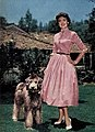 Donna Reed with poodle Shoo Shoo, 1954.jpg
