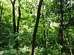 Dovhorakivskyi Botanical Reserve (2019.05.26) 05.jpg