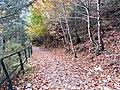 Dry leaves track.jpg