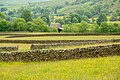 Dry stone fences in the Yorkshire Dales, England.jpg