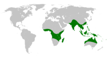 Drynaria distribution map.png