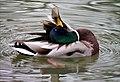 Ducks (39077405074).jpg