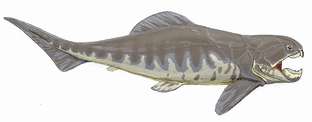 Dunkleosteus - Wikipedia, la enciclopedia libre - photo#20