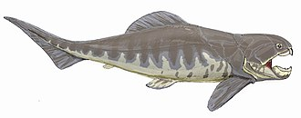 Gnathostomata - Image: Dunkleosteus intermedius