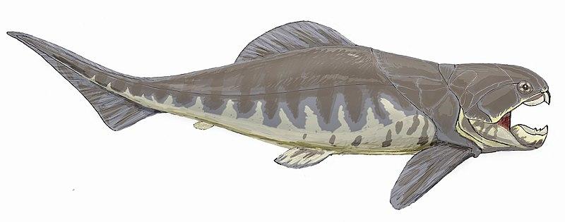 File:Dunkleosteus intermedius.jpg