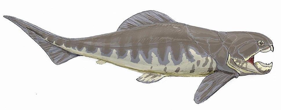 Dunkleosteus intermedius