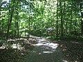 Dunn's Woods pathway southwestward.jpg