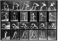 "E. Muybridge ""Animal locomotion"", plate Wellcome L0018597.jpg"
