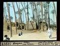 ETH-BIB-Memphis, Hütten unter Palmen-Dia 247-10957.tif