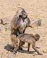 ET Amhara asv2018-02 img030 Wunenia.jpg