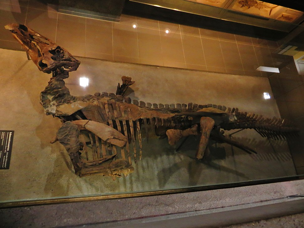 Edmontosaurus mummy 6756
