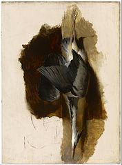 Study of a Dead Heron