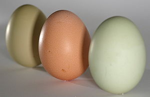 Some green and a brown egg standing on end wit...