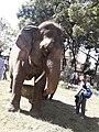 Elephant20171111 122203.jpg