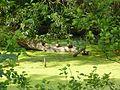 Enten im geschützten Landschaftsteil.jpg