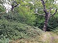 Epping Forest 20170727 111605 (49374371893).jpg