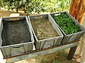 Etapas de cultivo de cafe.jpg