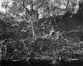 Ett stycke av terasserna i urskogen. Lokal, Incahuasi vid Caraparicito, Bolivia. Chuquisaca - SMVK - 005801.tif