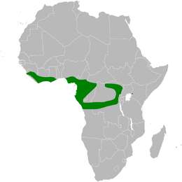 Eurillas ansorgei distribution map.png