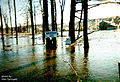 FEMA - 1006 - Photograph by Alan Springett taken on 04-25-1998 in New York.jpg