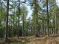 Faccombe Wood - geograph.org.uk - 395255.jpg