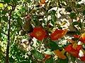 Fale - Giardini Botanici Hanbury in Ventimiglia - 678.jpg