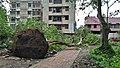Fallen Bodhi Tree - 2018-04-17 Norwester Aftermath - Padmapukur Water Treatment Plant Road - Howrah 20180418081144.jpg