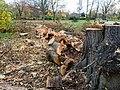 Fallen tree (11162165815).jpg