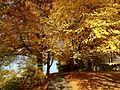 Feuilles d'automne - panoramio.jpg