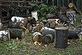 Firewood in Russia. img 23.jpg