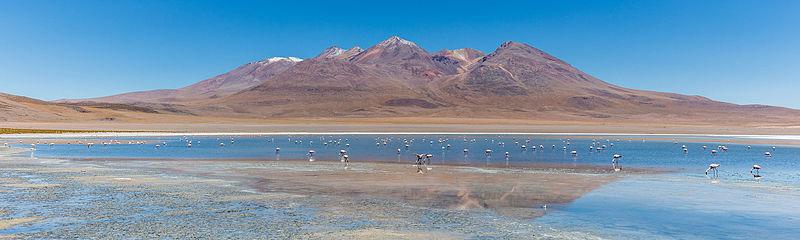 File:Flamencos andinos (Phoenicoparrus andinus), Laguna Cañapa, Bolivia, 2016-02-03, DD 63.JPG