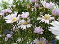 Fleur-blanche-pistil-jaune VAN DEN HENDE ALAIN CC -BY-SA 4 0 05492 BG PDP -1449060475j5g.jpg
