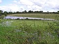 Flooded ground, Curly - geograph.org.uk - 1457910.jpg