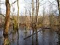 Flooded path in the Teufelsbruch swamp 19.jpg