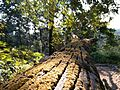 Flora in Buxa forest.jpg
