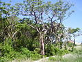 Flora of Cuba 1.JPG