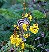 Flower, buds, leaves, fruit I IMG 1594