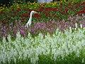Flower Lover (14941421978).jpg