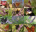 Flowercampping Domaine de Gajan with Lavendula and lots of nice coloured insects - panoramio.jpg