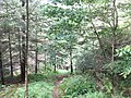 Footpath eastwards through the forest - geograph.org.uk - 501718.jpg
