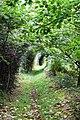 Footpath from Llangrannog to Eisteddfa - geograph.org.uk - 953444.jpg